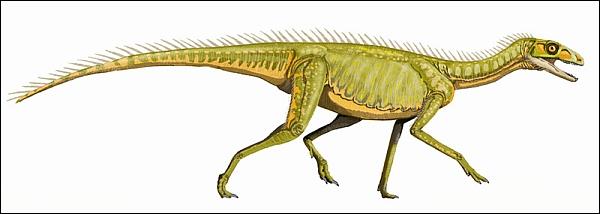 Динозавроморф Silesaurus, живший в конце триаса (изображение Dmitry Bogdanov / Wikipedia)
