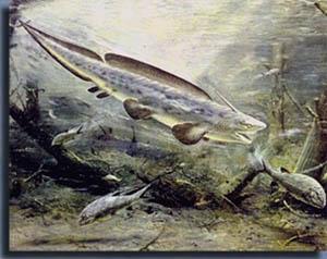 Хрящевая рыба Xenacanthus гонится за палеониксом Amblypterus.